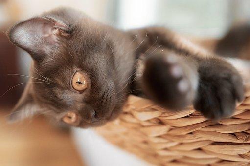 Cat, Kitten, Cute, Domestic Cat, Sweet