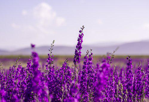 花, 紫, ラベンダー, 自然, 庭, 愛, 瞑想, 花, 花, 花, 花, 紫
