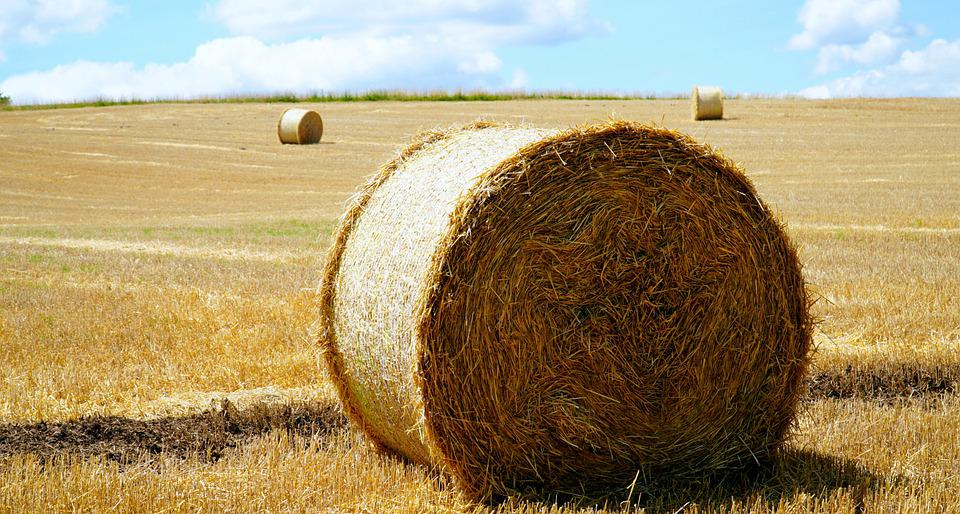 Straw, Hay, Harvest, Agriculture, Field, Hay Bales