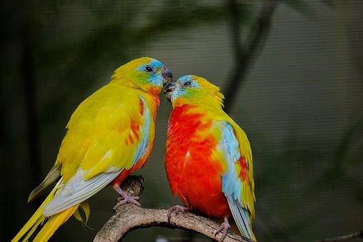 Beautiful Parakeet, Bird, Love, Pair