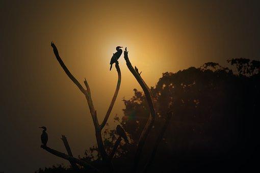 Bird, Silhouette, Golden Hour, Nature