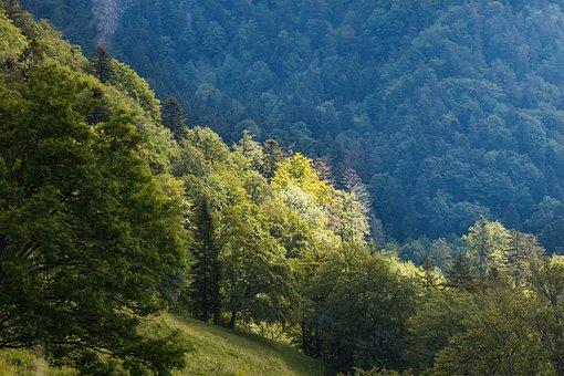 Forest, Trees, Light, Landscape, Hill