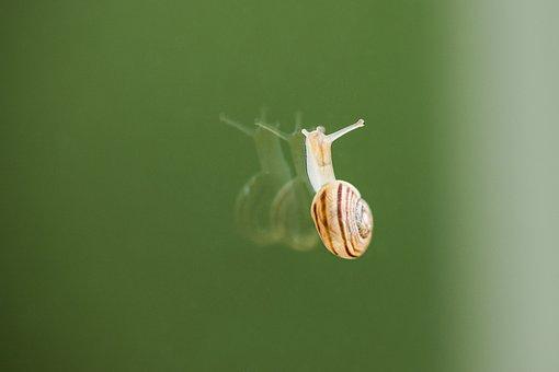 Snail, Crawl, Glass, Mirroring