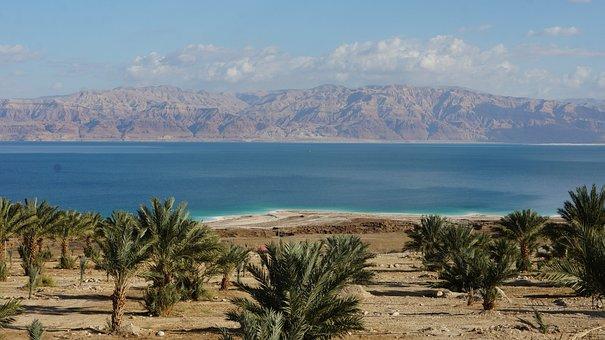 Israel, Dead Sea, Landscape, Date, Palms