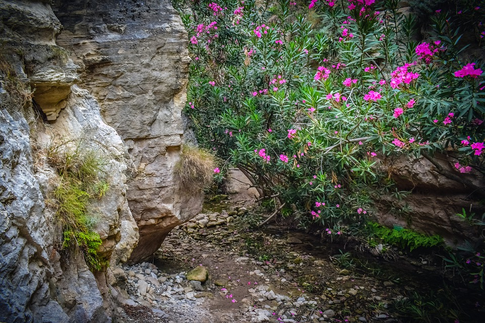Cyprus, Akamas, National Park, Avakas Gorge, Nature