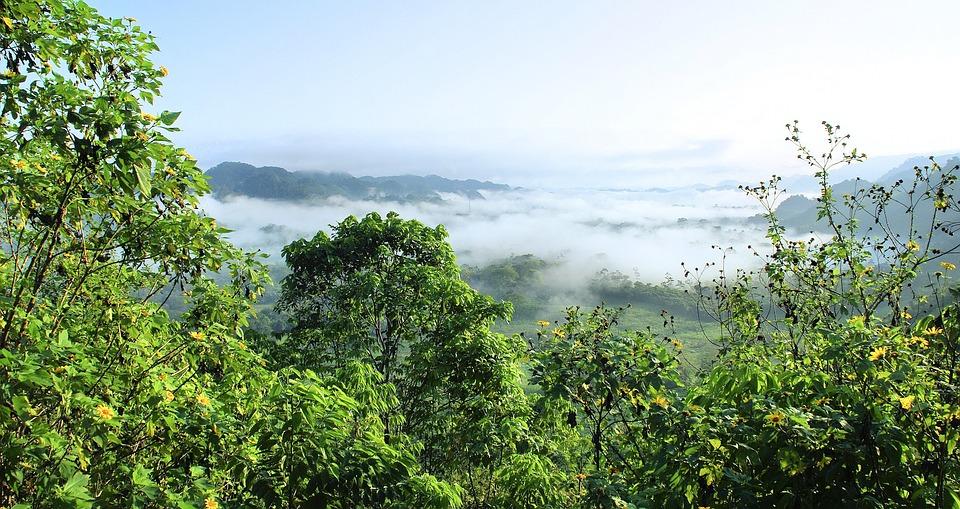 Amazonie, Selva, Bosque Primario, Niebla