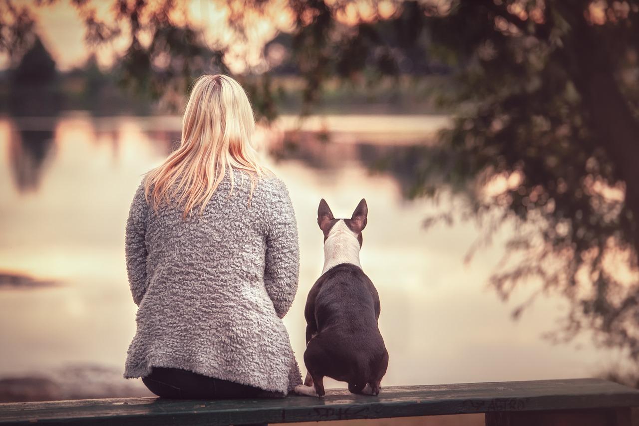 Dog Human Friends - Free photo on Pixabay
