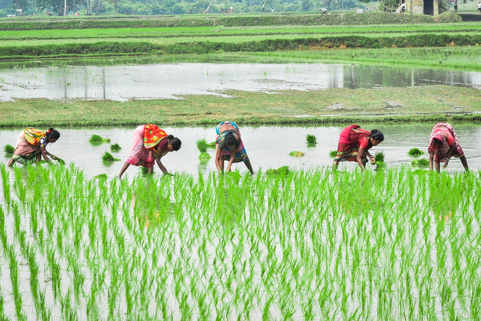 Types Of Agriculture In India