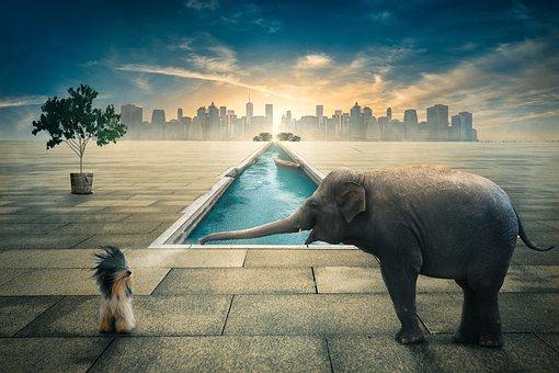 Elefant, Hund, Wasser, Schwimmbad
