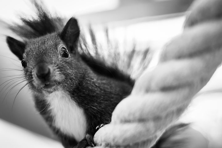Picture of squirrel climbing rope.