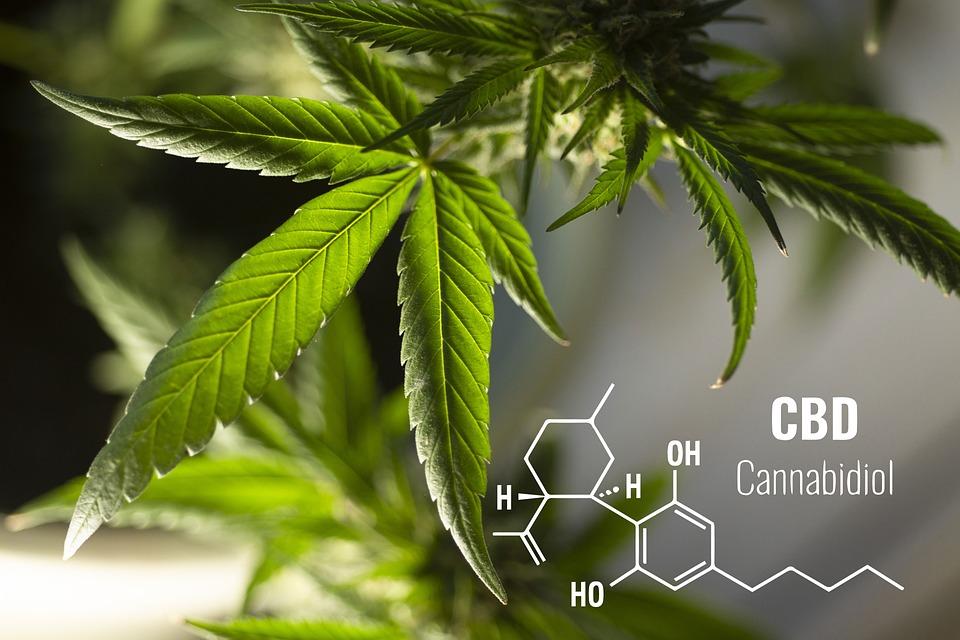 Bladeren, Cannabis, Plantaardige, Kruiden, Geneeskunde