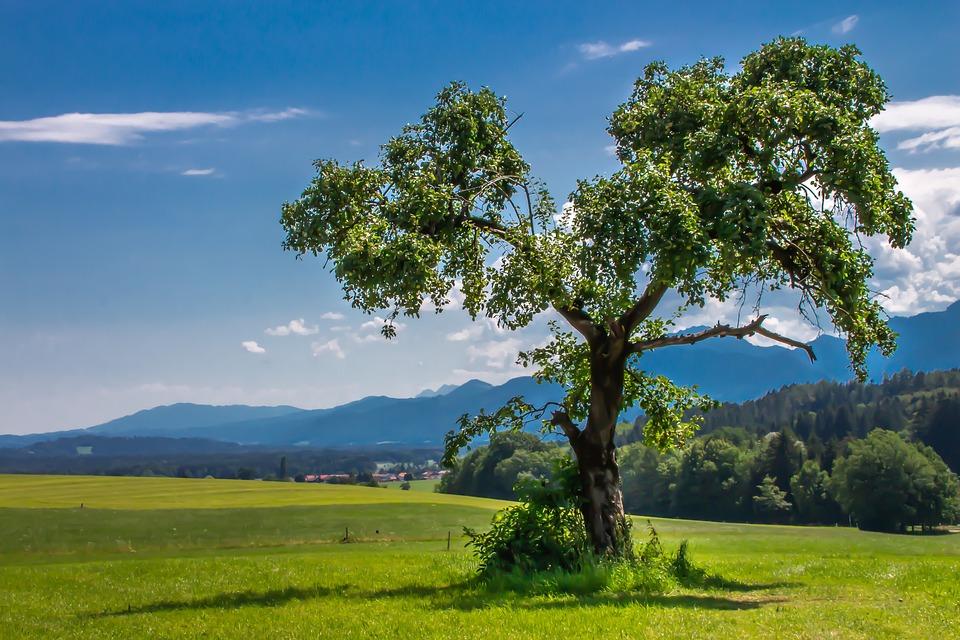 Baum, Landschaft, Berge, Wiese, Weide, Sommer
