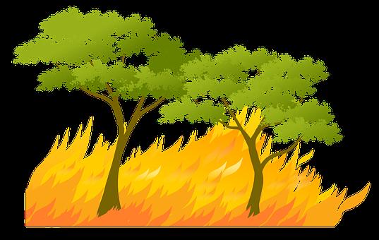Element, Fire, Forest, Summer, Heat