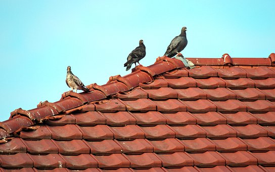 900+ Free Roofing Tiles & Roof Photos - Pixabay