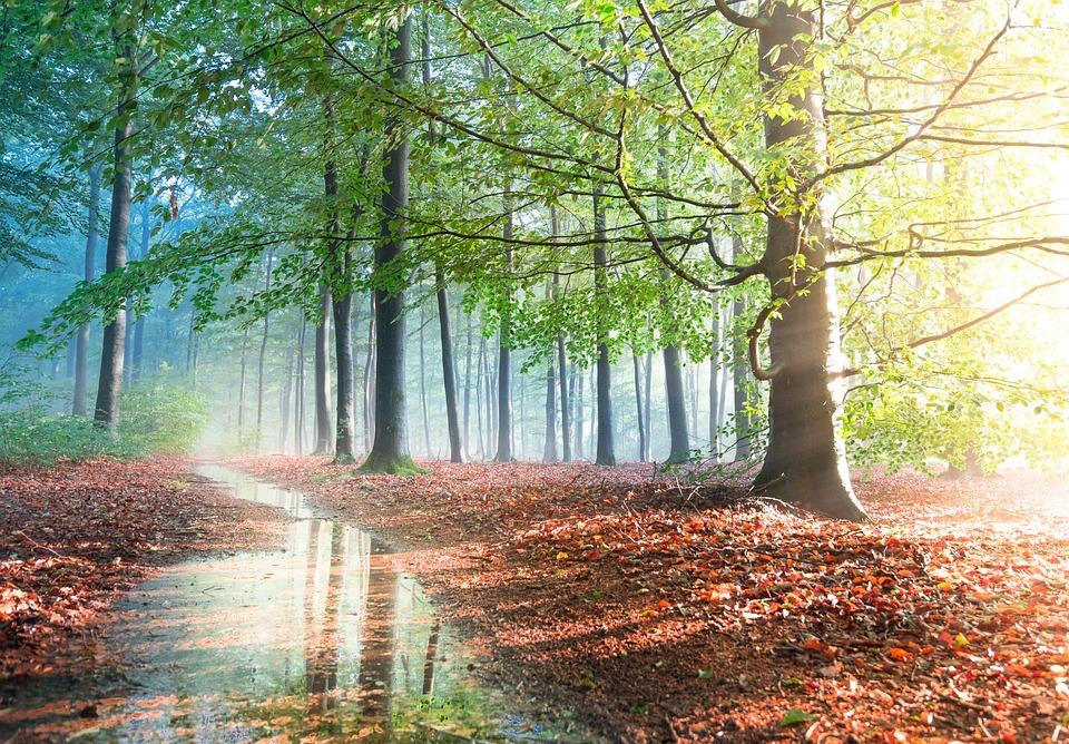 Forest, Light, Trees, Path, Sunset, Sunlight, Sunbeam