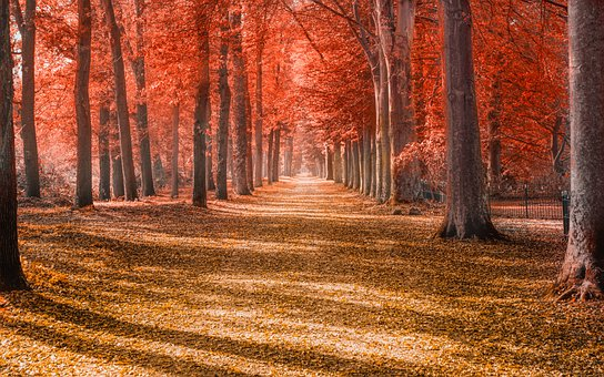 Forest, Leaves, Trees, Autumn, Path, Red