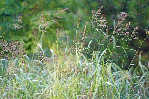 Flower Meadow, Field, Grass, Garden
