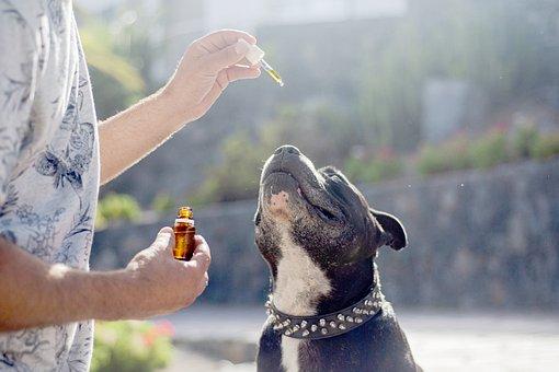 Cbd Oil Dogs, Cbd Oil Pets, Hemp Oil Dog
