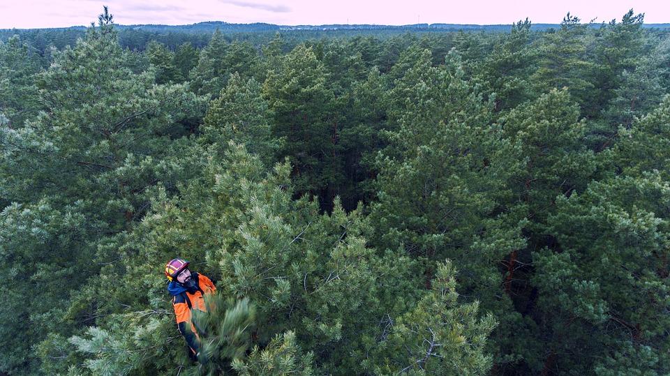 Hombre, Árboles, Forestales, Arborista, Arborism