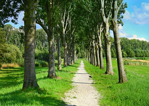 Lane, Path, Tree Lined, Trees, Landscape