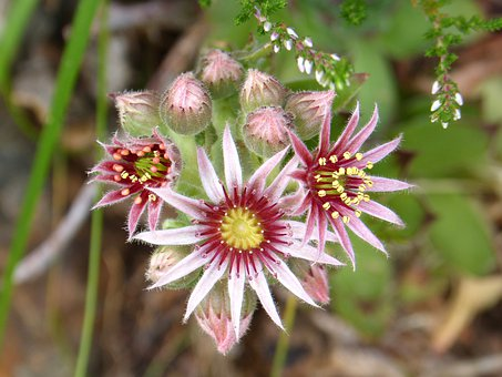 Flowers, Petals, Leaves, Foliage, Stem