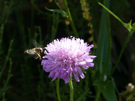 Flower, Petals, Stem, Plants, Buds