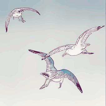 Seagulls, Gulls, Birds, Flight, Flying