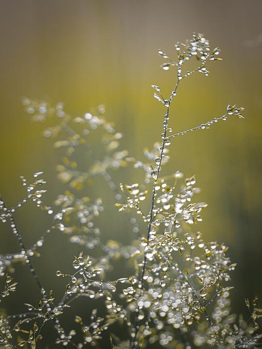 Красивые фото Plant-5470631_960_720