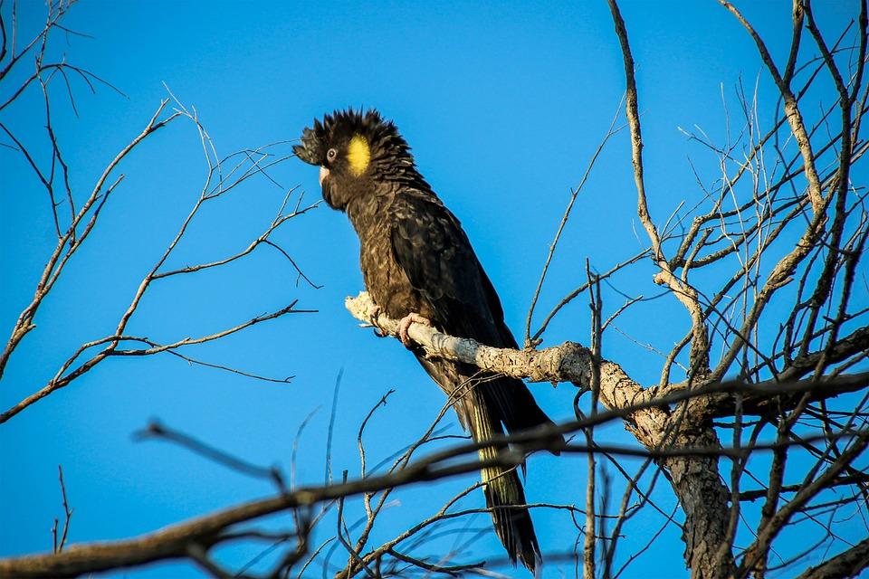 Goonoo Important Bird Area