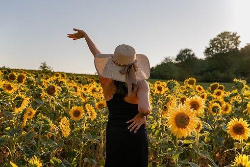Tournesols, Sur Le Terrain, Fleurs, Pré