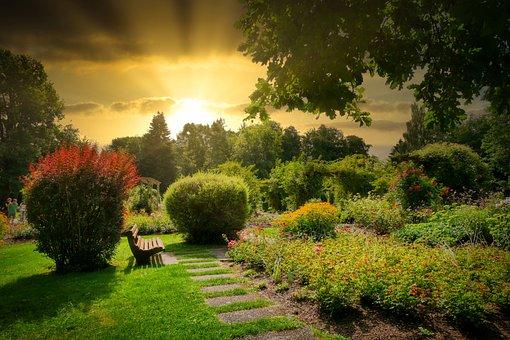 Park, Garden, Bench, Trees, Bushes