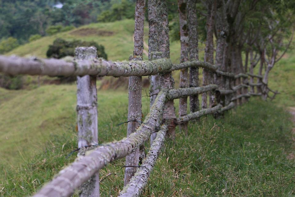 Płot, Szermierka, Drewno, Ogrodzenia Drewniane, Roślin