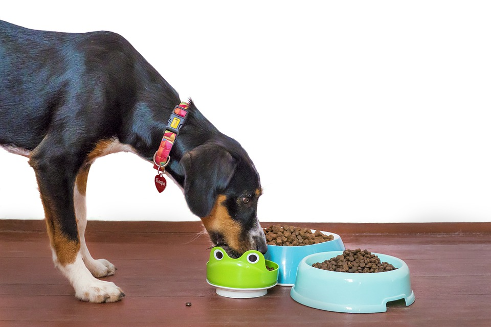 Dog, Pet, Food, Bowl, Kibble, Paws, Treat