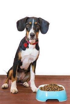 Dog, Pet, Food, Bowl, Kibble, Paws