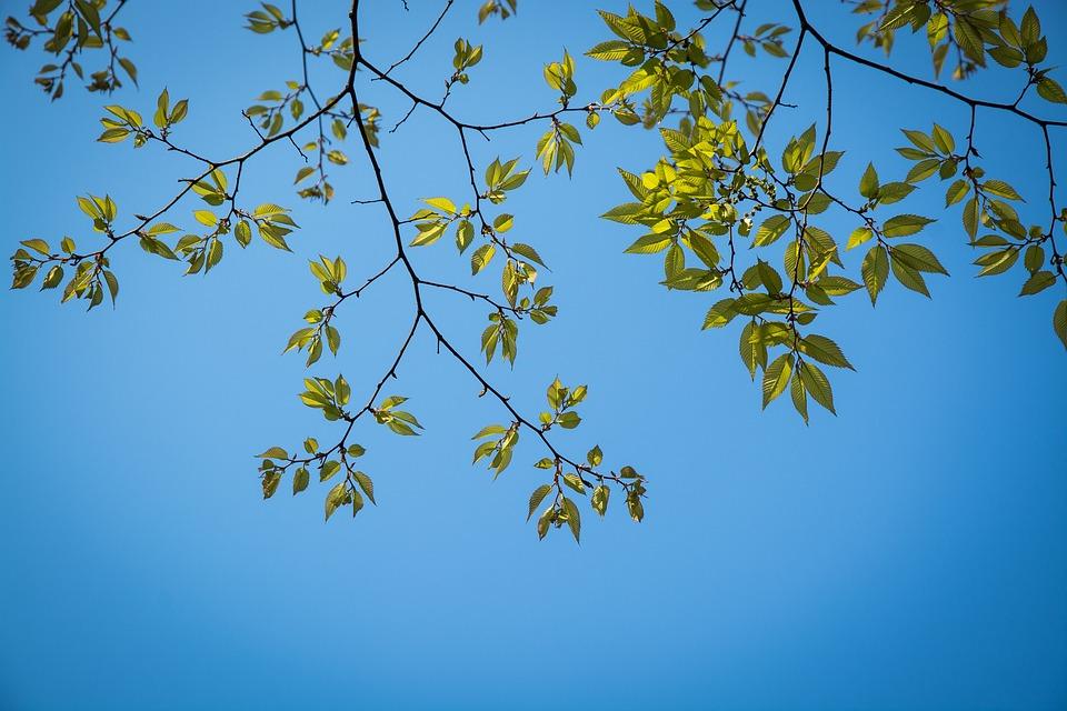 葉、葉、木、植物、空、壁紙