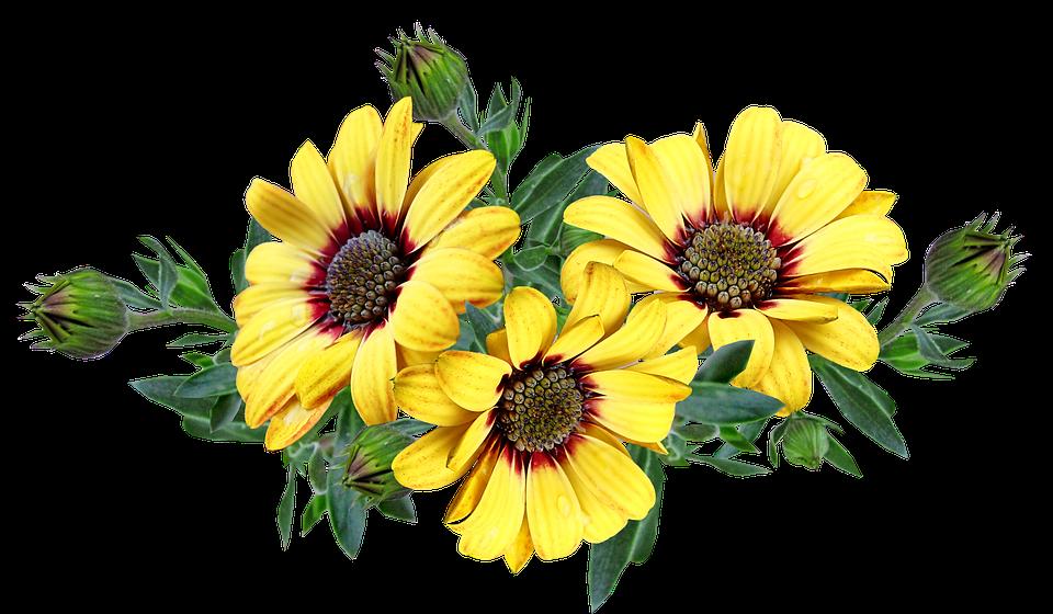 花, 黄色の花, ヒマワリ, フラワーアレンジメント, 花の束, グリーティング カード, 装飾