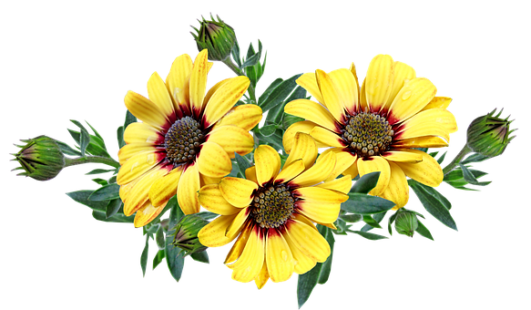 flowers-5520945__340.png