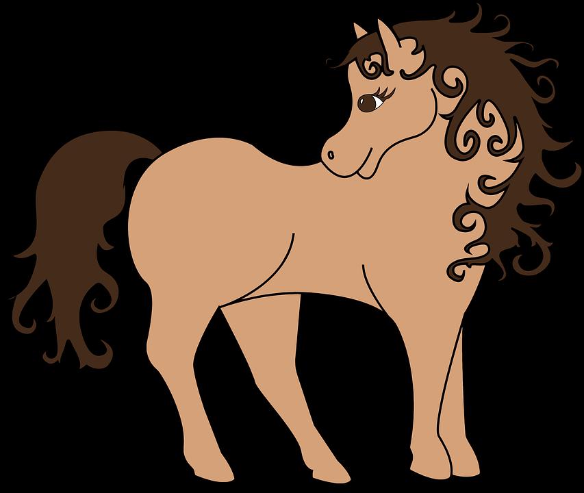 Hewan Kuda Poni Gambar Gratis Di Pixabay