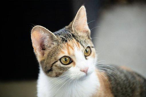 Katze, Tier, Haustier, Säugetier