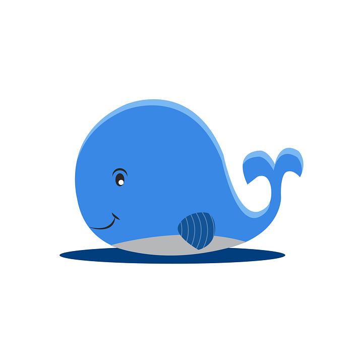 Baleia Azul Desenhos Animados Grafico Vetorial Gratis No Pixabay