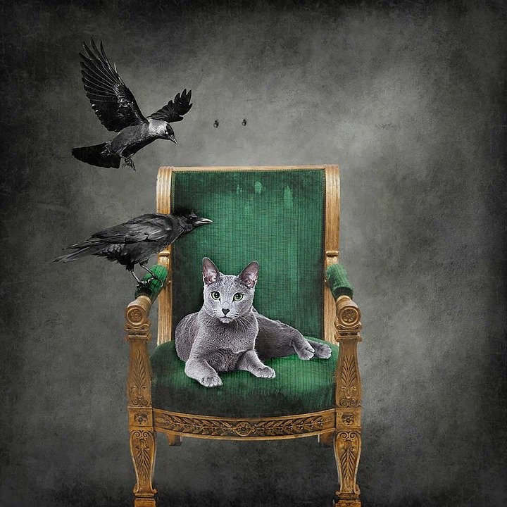 Chair, Vintage, Rest, Seat, Classic, Old Chair, Crow