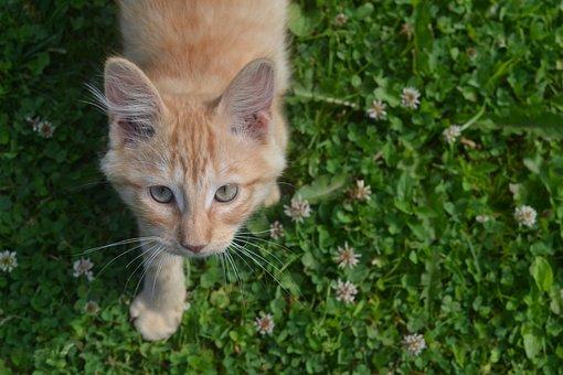 Kitten, Cat, Kitty, Feline, Domestic