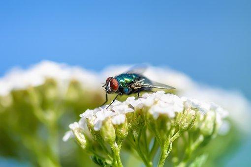 Using the Best Pest Control Companies in Dubai