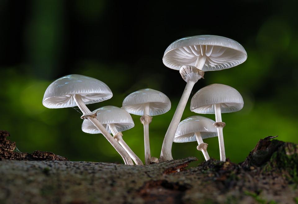 Mushrooms, Book Mucus Oyster Mushroom, Autumn, Mushroom