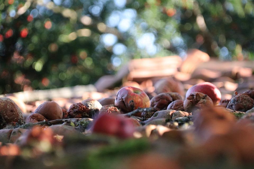 Äpfel, Obst, Verfault, Dach, Organisch, Ernte