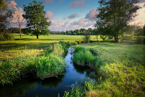 Bach, Creek, Stream, Brook, Meadow
