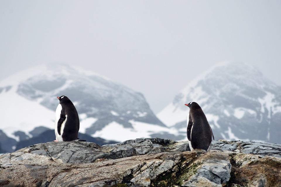 Ilustrasi penguin