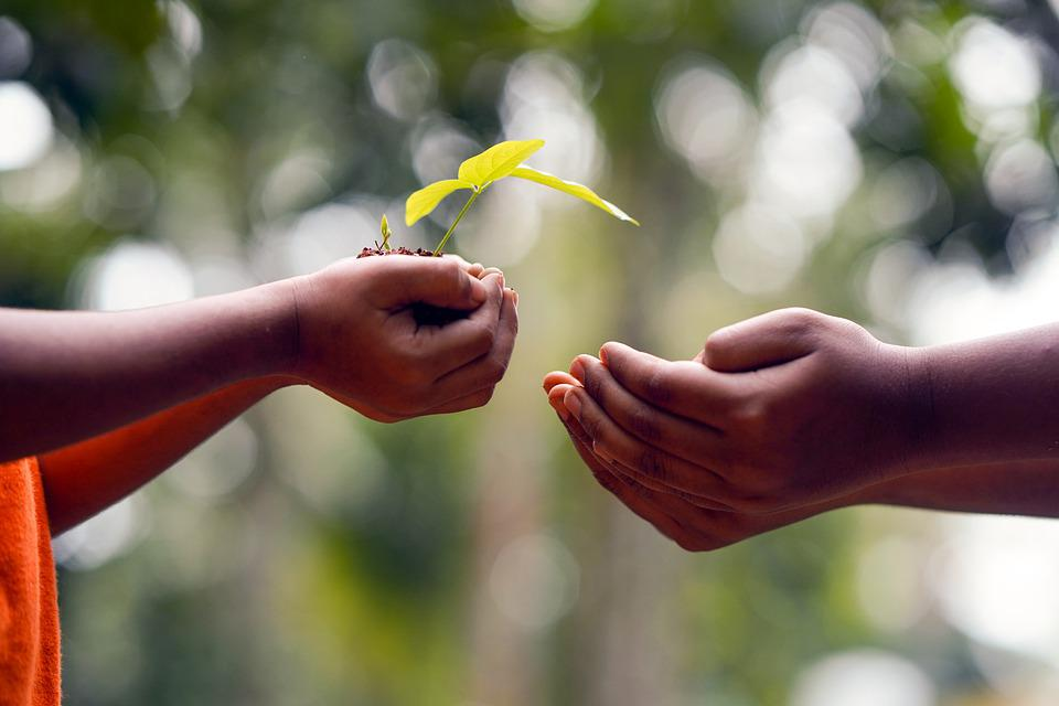 Hands, Soil, Plant, Environment, Growth, Nature, Dirt
