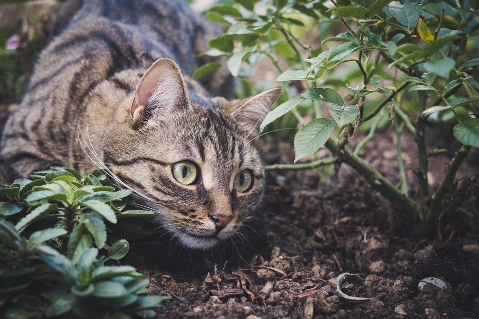 効果抜群のおすすめ猫よけグッズ!最強の猫よけグッズはどれ?のサムネイル画像