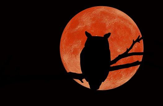 Owl, Silhouette, Moon, Night Sky